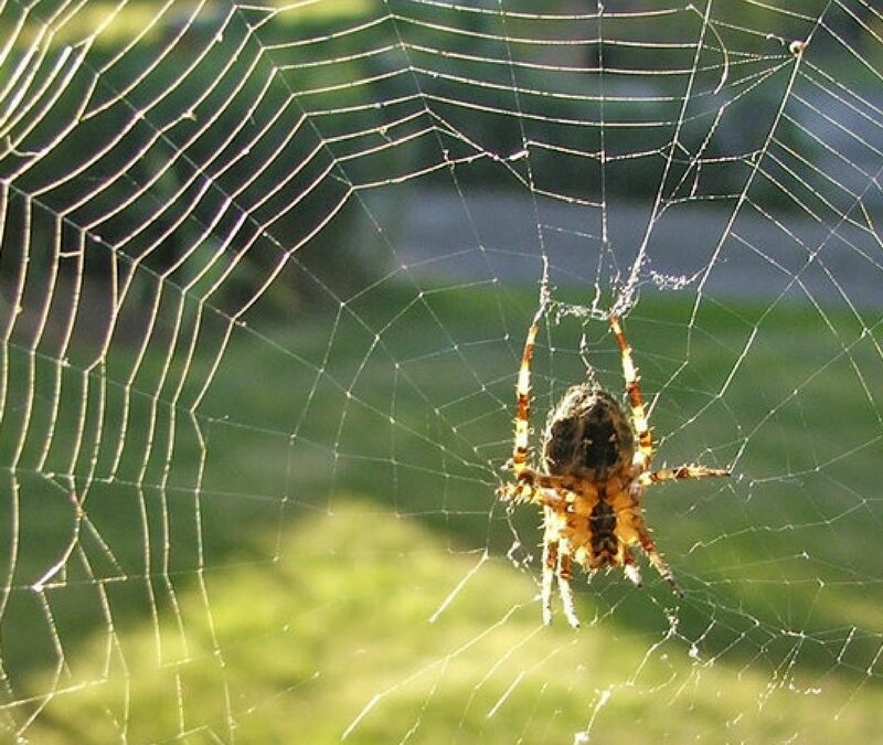 Animals in Fall: the Cross Spider