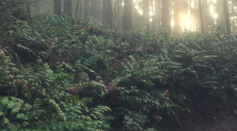 Native Plant of the Month: Oregon Grape