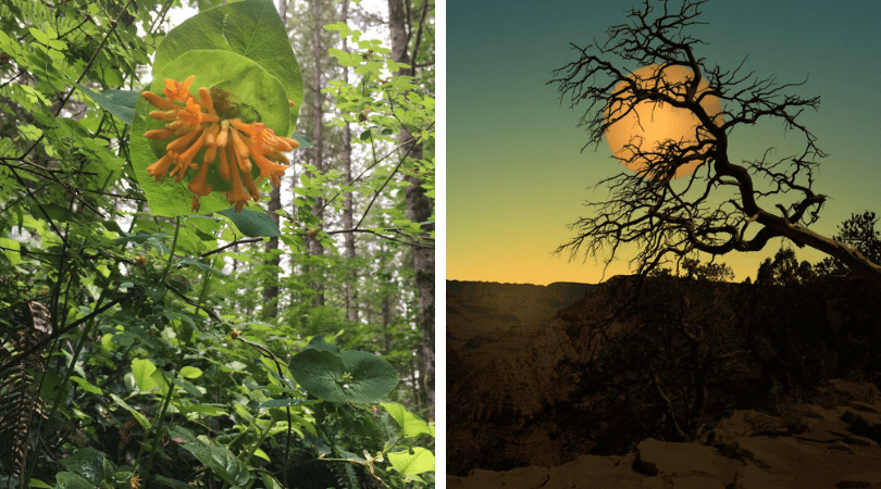 Our Connection to Nature