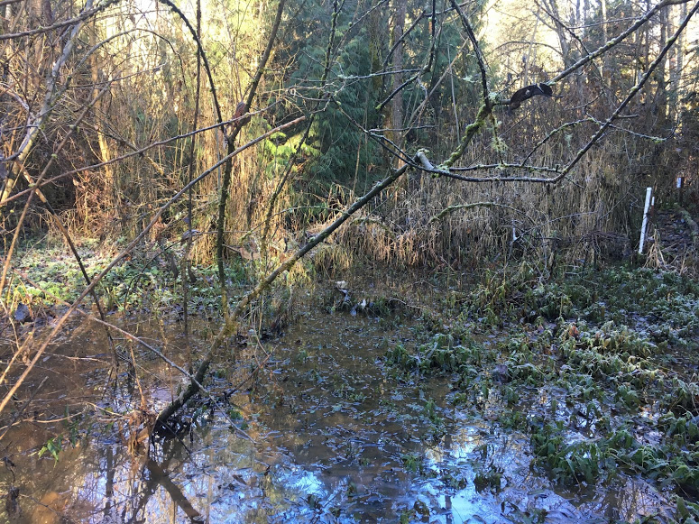 The Worth of Our Water and Wetlands