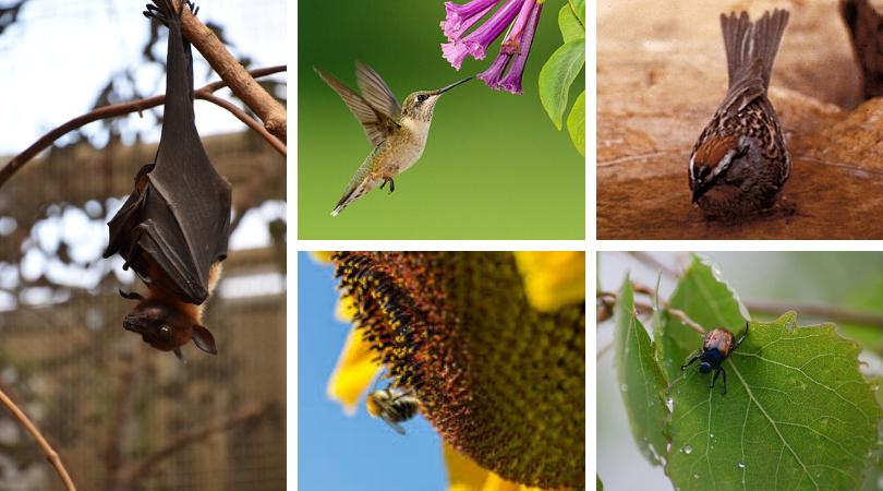 Pollinators: a flowering plant's best friend