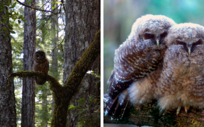 Owl Nests