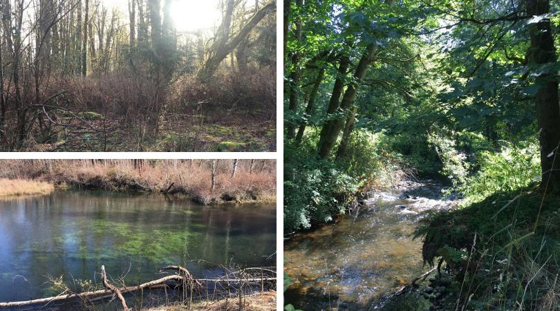 Ecosystem Services: Wetlands