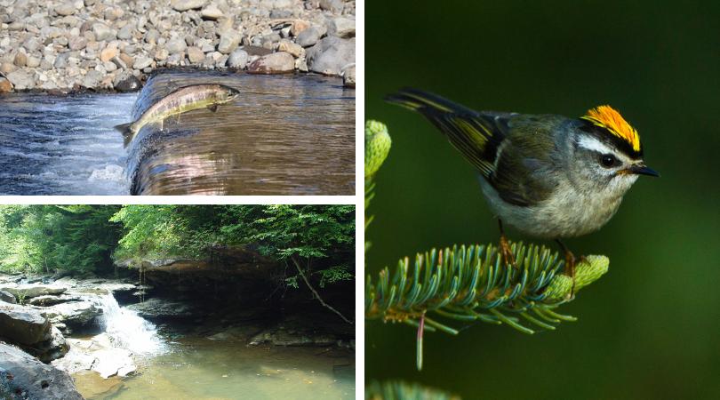 Salmon increase bird abundance