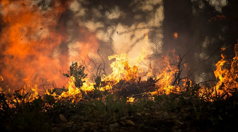 Wildfires and the Climate Crisis